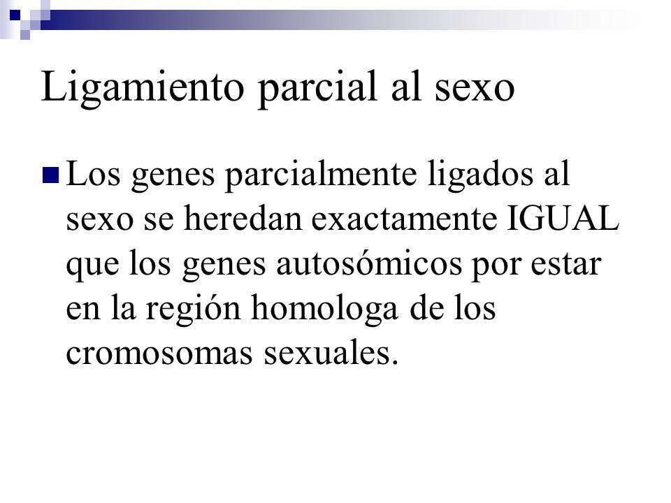 Ligamiento parcial al sexo Los genes parcialmente ligados al sexo se heredan exactamente IGUAL que los genes autosómicos por estar en la región homolo