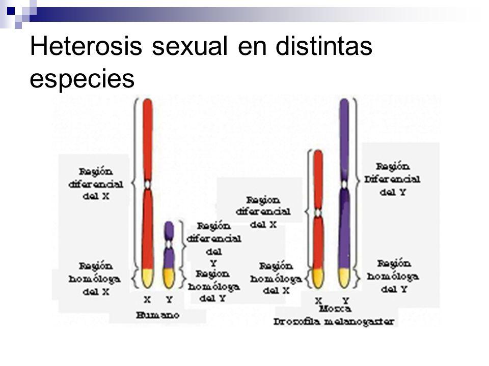 Heterosis sexual en distintas especies