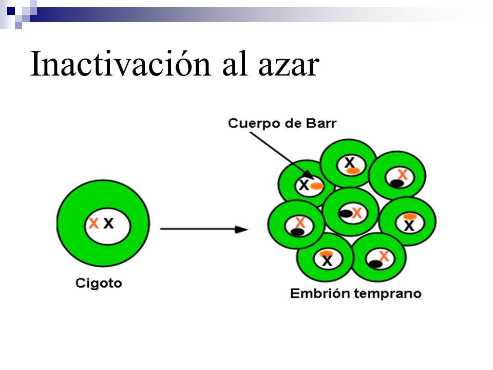 Ejemplos Gen que determina el sexo masculino (SRY) Hipertricosis en oreja (humanos)