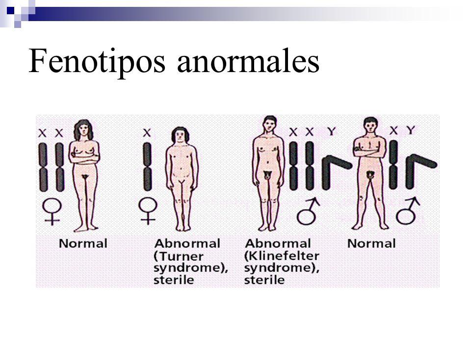 Ligamiento parcial al sexo Los genes parcialmente ligados al sexo se heredan exactamente IGUAL que los genes autosómicos por estar en la región homologa de los cromosomas sexuales.