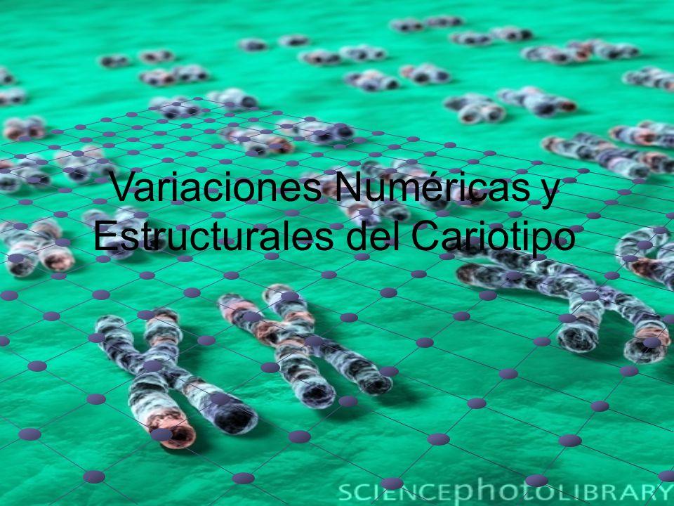 Conjunto de características morfológicas, número, tamaño y forma, del complemento cromosómico de una especie Complemento cromosómico: propio de la especie dos juegos de cromosomas (diploide) genomio (X) número gamético (n) número basico
