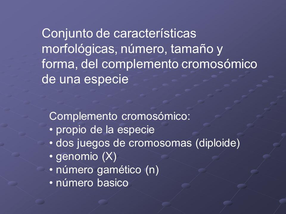Estructura de los cromosomas del cariotipo Cromosomas presentan una morfología y ordenamiento normal, propio de cada par Homocigota estructural: igual ordenamiento entre los cromosomas del par (no confundir con homocigota génico) Heterocigota estructural: distinto ordenamiento entre los cromosomas del par (no confundir con heterocigota génico)