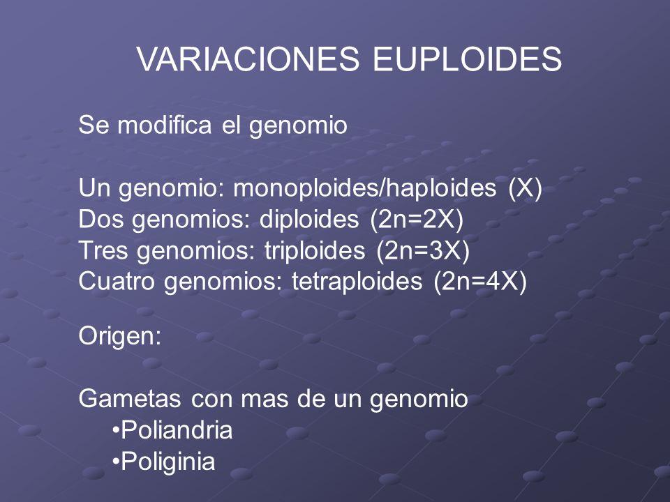 Cariotipo triploide 2n=3X