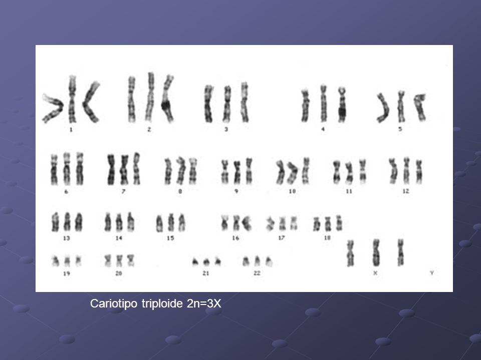 VARIACIONES ANEUPLOIDES Se modifica algún cromosoma del complemento: Disómico (normal): 2n Nulisómicos: 2n-2 Monosómicos: 2n-1 Trisómicos: 2n+1 Trisómico doble: 2n+1+1 Tetrasómico: 2n +2 Origen: Gametas n-1; n+1; n+1+1; etc No disyunción en AI o AII