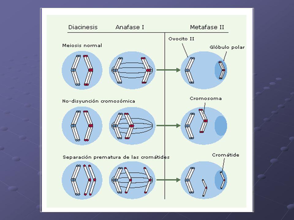 Duplicaciones Se duplica un segmento del cromosoma Puede en un cromosoma o en ambos del par Homocigota estructural Heterocigota estructural Origen: Apareamiento desigual en el bivalente