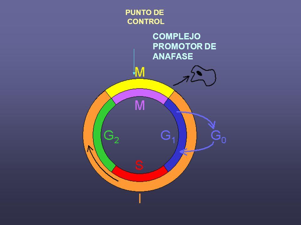 PUNTO DE CONTROL COMPLEJO PROMOTOR DE ANAFASE