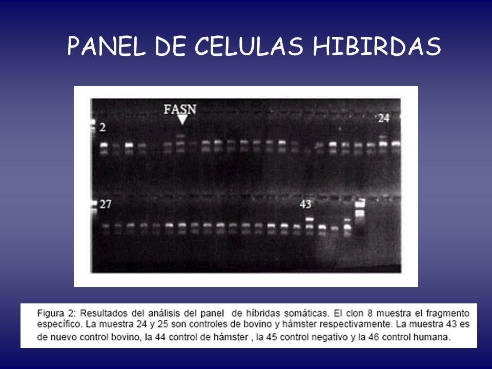 PANEL DE CELULAS HIBIRDAS
