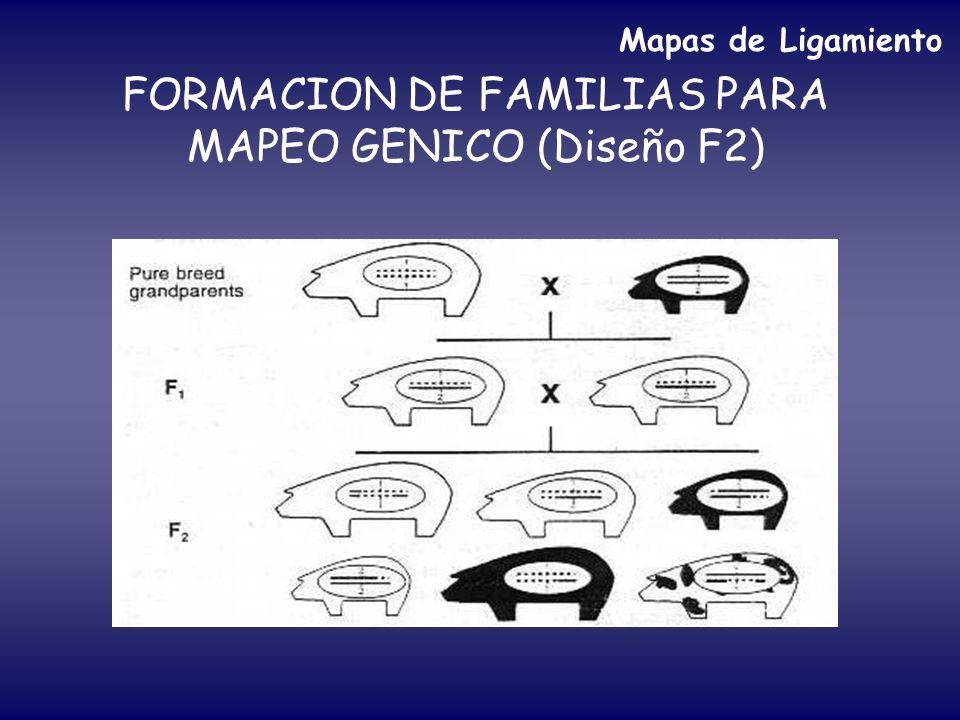 FORMACION DE FAMILIAS PARA MAPEO GENICO (Diseño F2) Mapas de Ligamiento