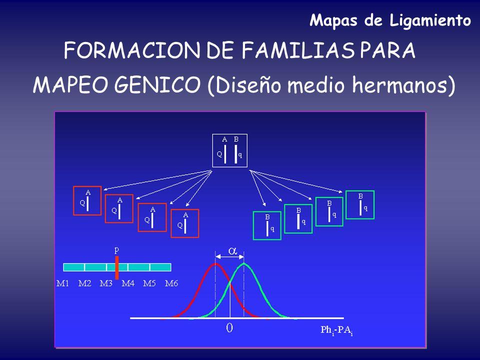 FORMACION DE FAMILIAS PARA MAPEO GENICO (Diseño medio hermanos) Mapas de Ligamiento