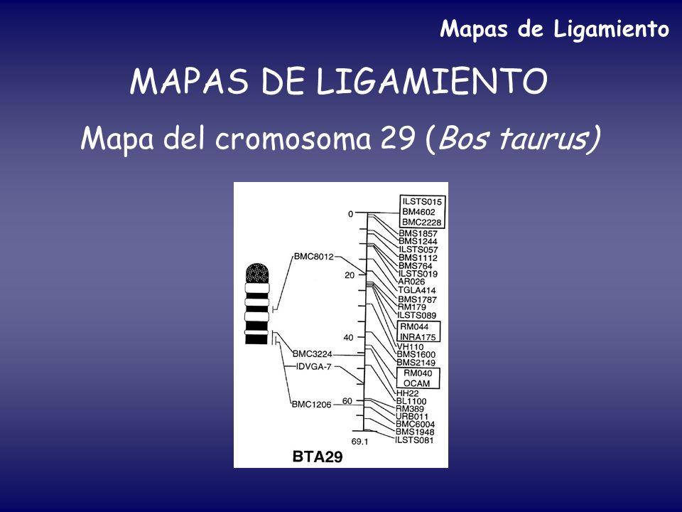 MAPAS DE LIGAMIENTO Mapa del cromosoma 29 (Bos taurus) Mapas de Ligamiento