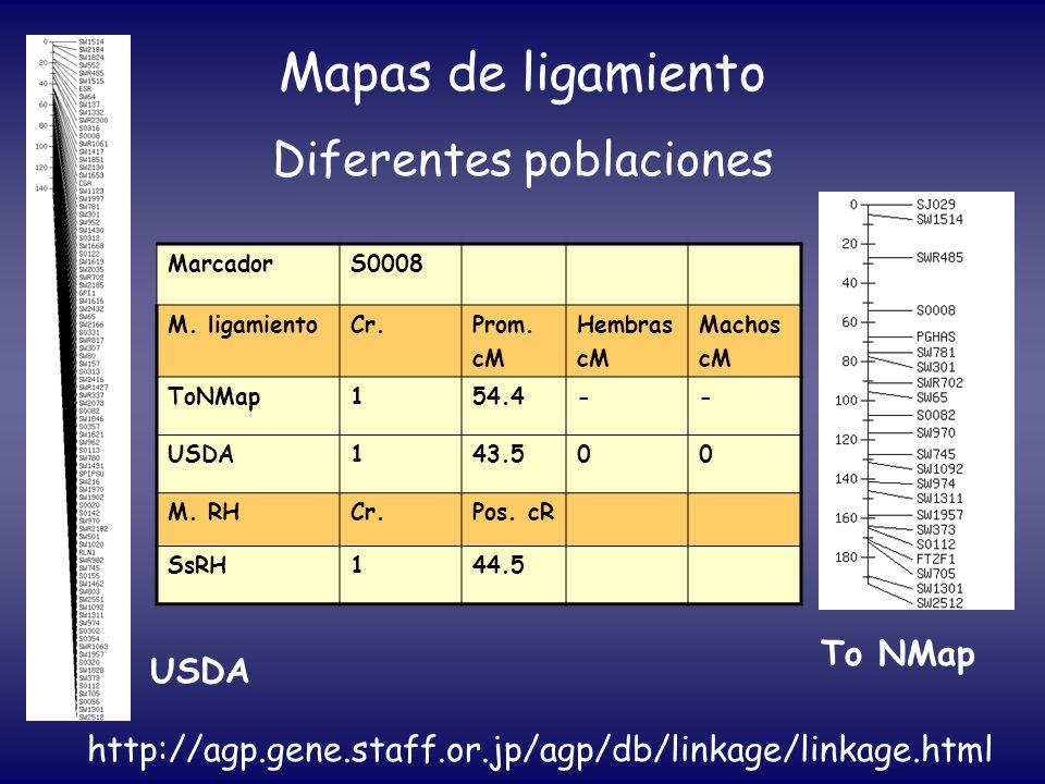 Mapas de ligamiento Diferentes poblaciones MarcadorS0008 M. ligamientoCr.Prom. cM Hembras cM Machos cM ToNMap154.4-- USDA143.500 M. RHCr.Pos. cR SsRH1