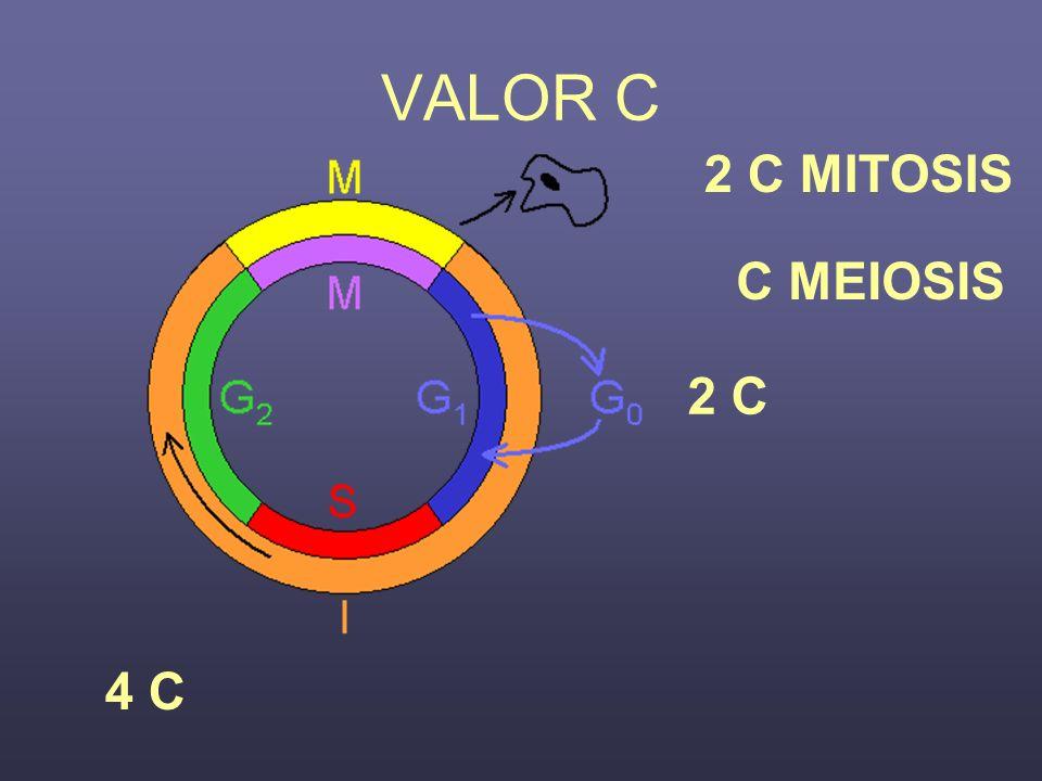 VALOR C 2 C 4 C 2 C MITOSIS C MEIOSIS