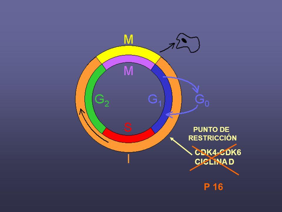 PUNTO DE RESTRICCIÓN CDK4-CDK6 CICLINA D P 16