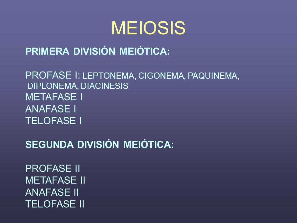 MEIOSIS PRIMERA DIVISIÓN MEIÓTICA: PROFASE I: LEPTONEMA, CIGONEMA, PAQUINEMA, DIPLONEMA, DIACINESIS METAFASE I ANAFASE I TELOFASE I SEGUNDA DIVISIÓN M
