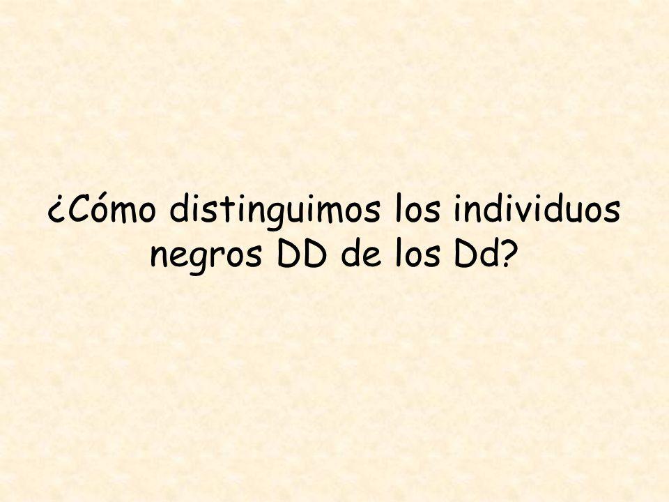 ¿Cómo distinguimos los individuos negros DD de los Dd?