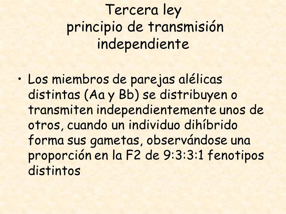 Tercera ley principio de transmisión independiente Los miembros de parejas alélicas distintas (Aa y Bb) se distribuyen o transmiten independientemente