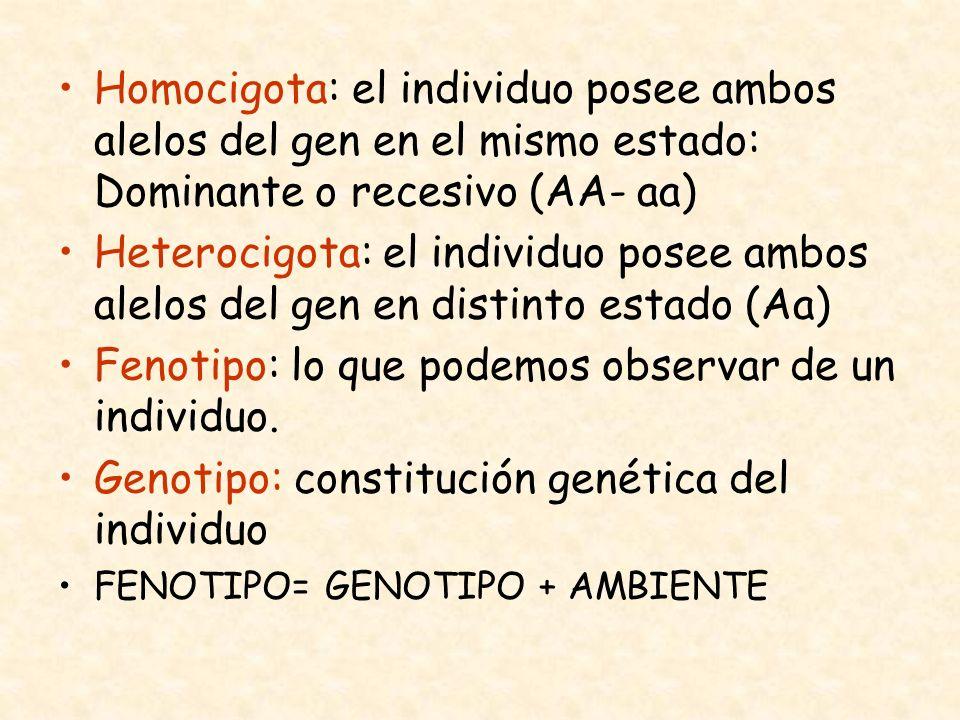 Homocigota: el individuo posee ambos alelos del gen en el mismo estado: Dominante o recesivo (AA- aa) Heterocigota: el individuo posee ambos alelos de