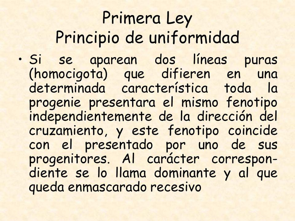 Primera Ley Principio de uniformidad Si se aparean dos líneas puras (homocigota) que difieren en una determinada característica toda la progenie prese