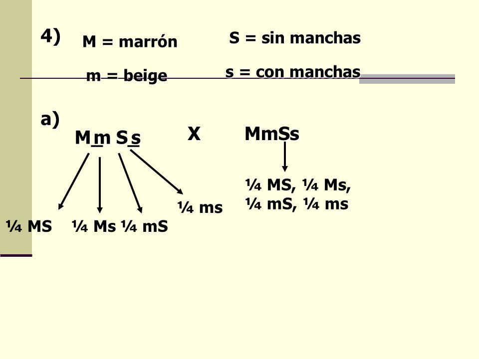 4) M = marrón m = beige S = sin manchas s = con manchas M_S_ms XMmSs a) ¼ MS¼ Ms¼ mS ¼ ms ¼ MS, ¼ Ms, ¼ mS, ¼ ms