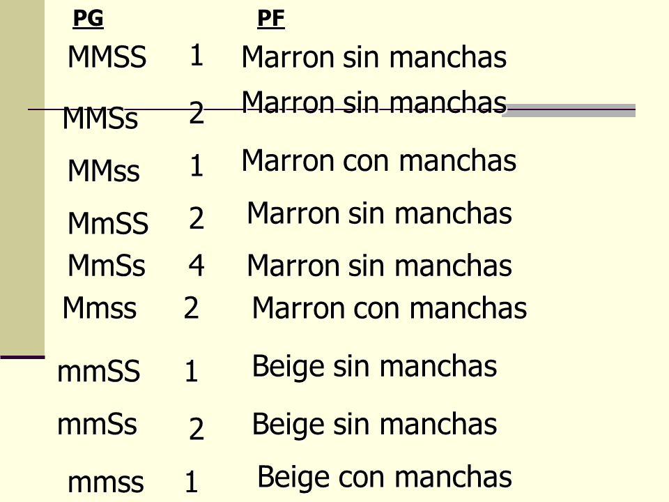 MMSS MMSs MMss MmSS MmSs Mmss mmSS mmSs mmss 1 2 1 2 4 1 2 1 2 Marron sin manchas Marron con manchas Marron sin manchas Marron con manchas Beige sin m