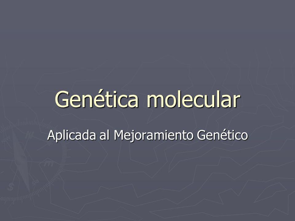 Implementación de MAS (Francia, bovinos para leche) 12 regiones cromosómicas con QTLs para: cantidad de leche, grasa, proteína, porcentaje de grasa y de proteína, fertilidad femenina y conteo de células somáticas 12 regiones cromosómicas con QTLs para: cantidad de leche, grasa, proteína, porcentaje de grasa y de proteína, fertilidad femenina y conteo de células somáticas -c/QTL explicaba el 8-20 % de la variación genética -c/QTL explicaba el 8-20 % de la variación genética -c/QTL monitoreado por 2 a 4 marcadores (microsatélites) -c/QTL monitoreado por 2 a 4 marcadores (microsatélites) -en c/animal se determinó el genotipo para 33 marcadores (43 en el 2006) -en c/animal se determinó el genotipo para 33 marcadores (43 en el 2006) -Animales: de la prueba Nacional: se determinó el genotipo para animales candidatos (machos y hembras elegidos por pedigree) y sus parientes disponibles: padres, abuelos, tíos, e hijas de padres de toros) -Animales: de la prueba Nacional: se determinó el genotipo para animales candidatos (machos y hembras elegidos por pedigree) y sus parientes disponibles: padres, abuelos, tíos, e hijas de padres de toros)