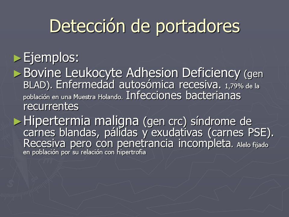 Detección de portadores Ejemplos: Ejemplos: Bovine Leukocyte Adhesion Deficiency (gen BLAD). Enfermedad autosómica recesiva. 1,79% de la población en