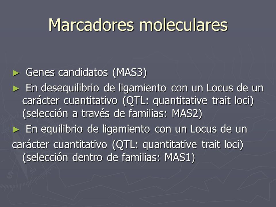 Marcadores moleculares Genes candidatos (MAS3) Genes candidatos (MAS3) En desequilibrio de ligamiento con un Locus de un carácter cuantitativo (QTL: q