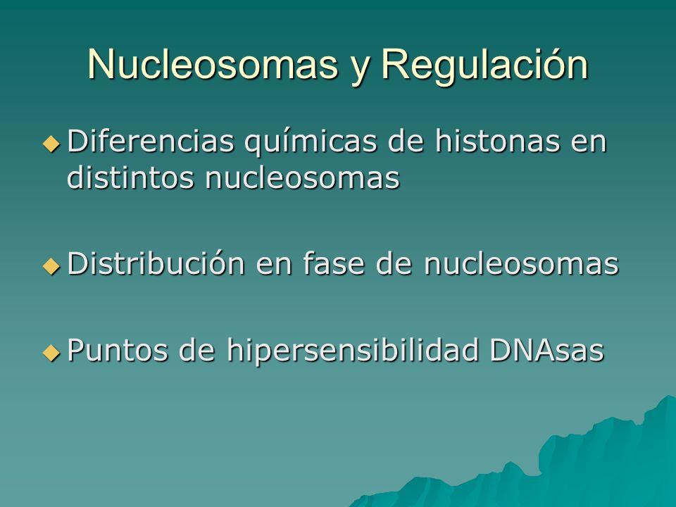 Diferencias químicas de histonas en distintos nucleosomas Diferencias químicas de histonas en distintos nucleosomas Distribución en fase de nucleosoma