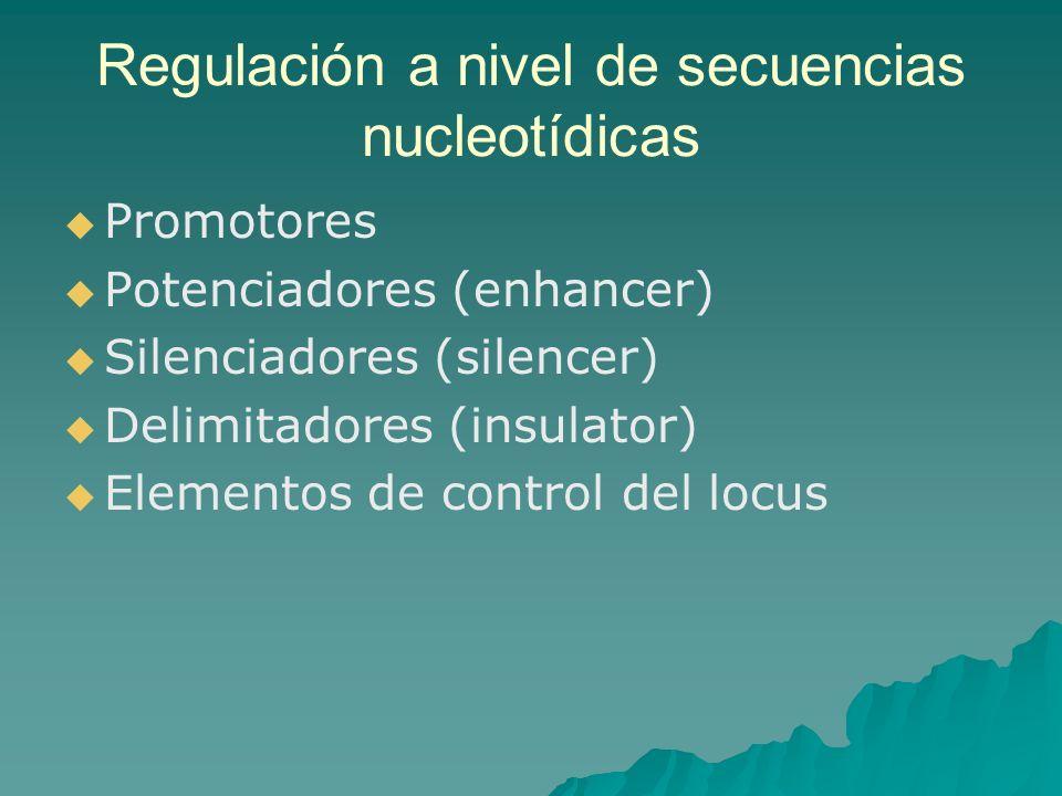Regulación a nivel de secuencias nucleotídicas Promotores Potenciadores (enhancer) Silenciadores (silencer) Delimitadores (insulator) Elementos de con