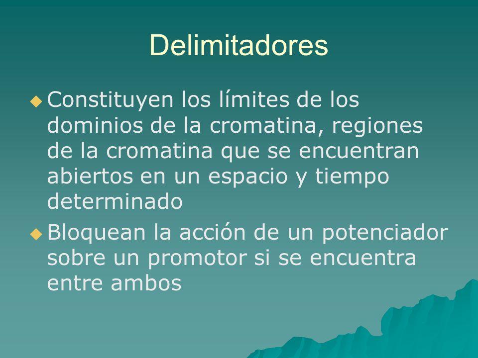 Delimitadores Constituyen los límites de los dominios de la cromatina, regiones de la cromatina que se encuentran abiertos en un espacio y tiempo dete