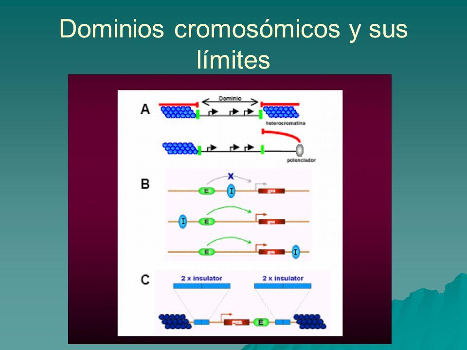 Dominios cromosómicos y sus límites
