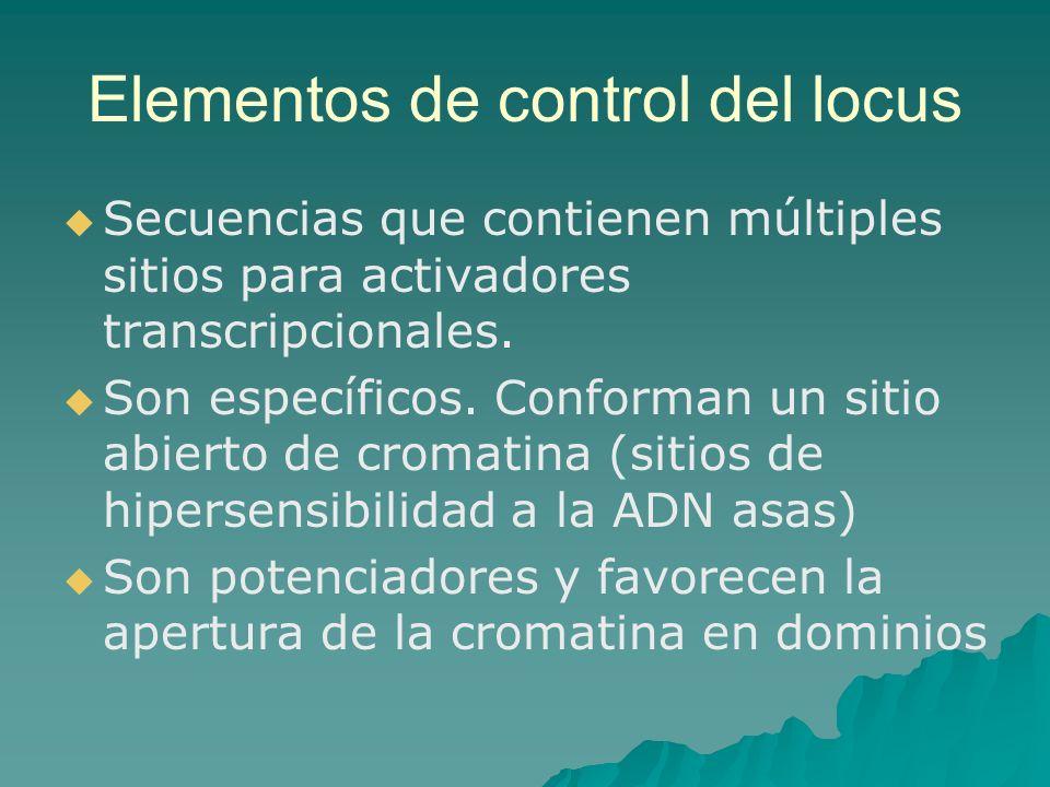 Elementos de control del locus Secuencias que contienen múltiples sitios para activadores transcripcionales. Son específicos. Conforman un sitio abier