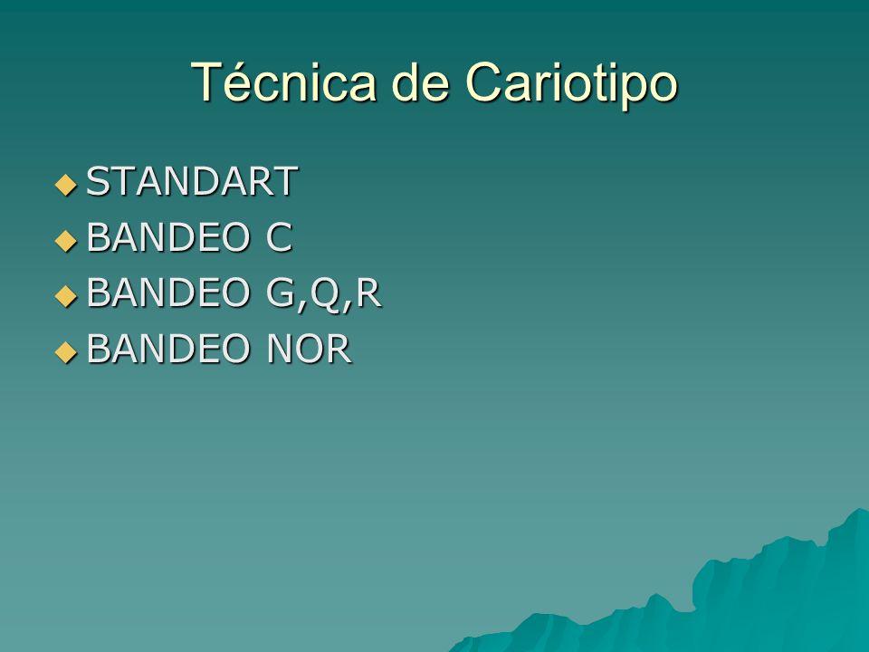 Técnica de Cariotipo STANDART STANDART BANDEO C BANDEO C BANDEO G,Q,R BANDEO G,Q,R BANDEO NOR BANDEO NOR