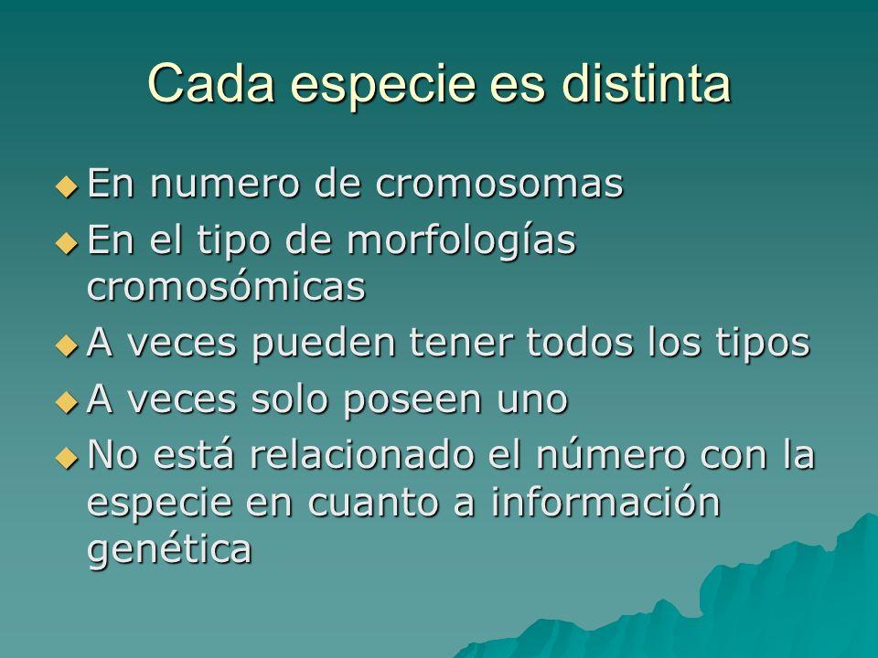 Cada especie es distinta En numero de cromosomas En numero de cromosomas En el tipo de morfologías cromosómicas En el tipo de morfologías cromosómicas
