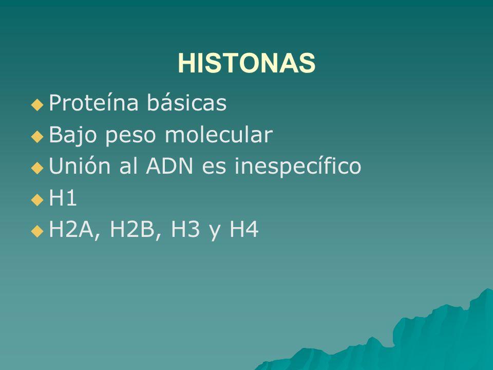 HISTONAS Proteína básicas Bajo peso molecular Unión al ADN es inespecífico H1 H2A, H2B, H3 y H4