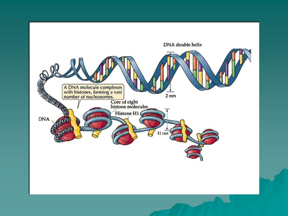 Regulación Transcripcional 1.Secuencias nucleotídicas 2.Estructura de la cromatina (herencia epigenética) 3.Organización espacial del genoma