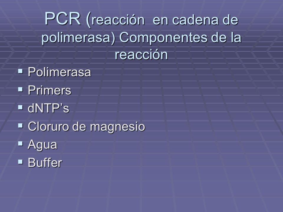 PCR ( reacción en cadena de polimerasa) Componentes de la reacción Polimerasa Polimerasa Primers Primers dNTPs dNTPs Cloruro de magnesio Cloruro de ma