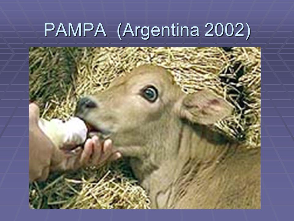 PAMPA (Argentina 2002)