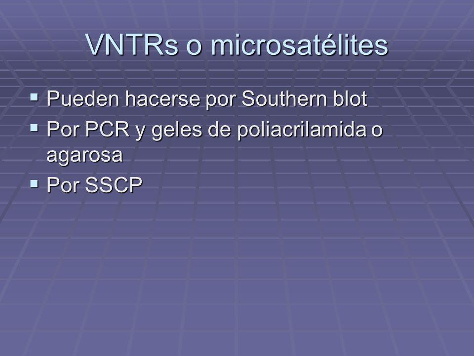 VNTRs o microsatélites Pueden hacerse por Southern blot Pueden hacerse por Southern blot Por PCR y geles de poliacrilamida o agarosa Por PCR y geles d