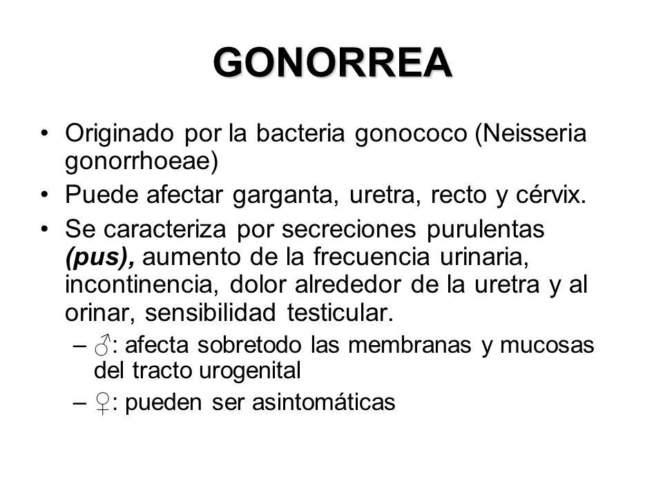 GONORREA Originado por la bacteria gonococo (Neisseria gonorrhoeae) Puede afectar garganta, uretra, recto y cérvix. Se caracteriza por secreciones pur