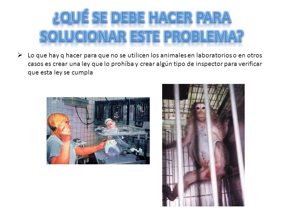 Lo que hay q hacer para que no se utilicen los animales en laboratorios o en otros casos es crear una ley que lo prohíba y crear algún tipo de inspect