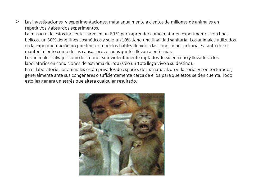 Las investigaciones y experimentaciones, mata anualmente a cientos de millones de animales en repetitivos y absurdos experimentos. La masacre de estos