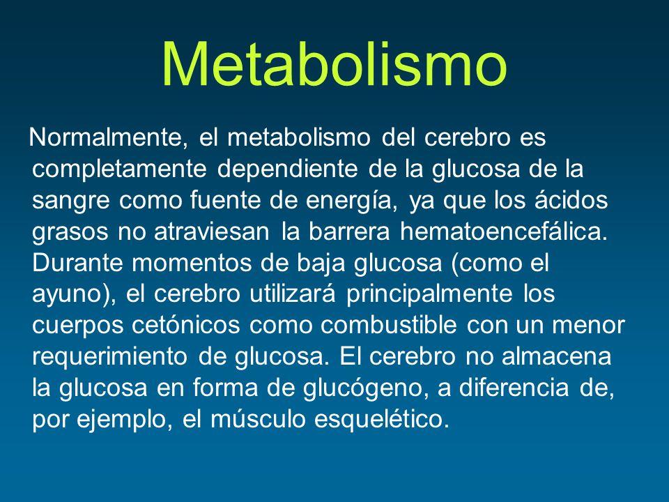 Metabolismo Normalmente, el metabolismo del cerebro es completamente dependiente de la glucosa de la sangre como fuente de energía, ya que los ácidos