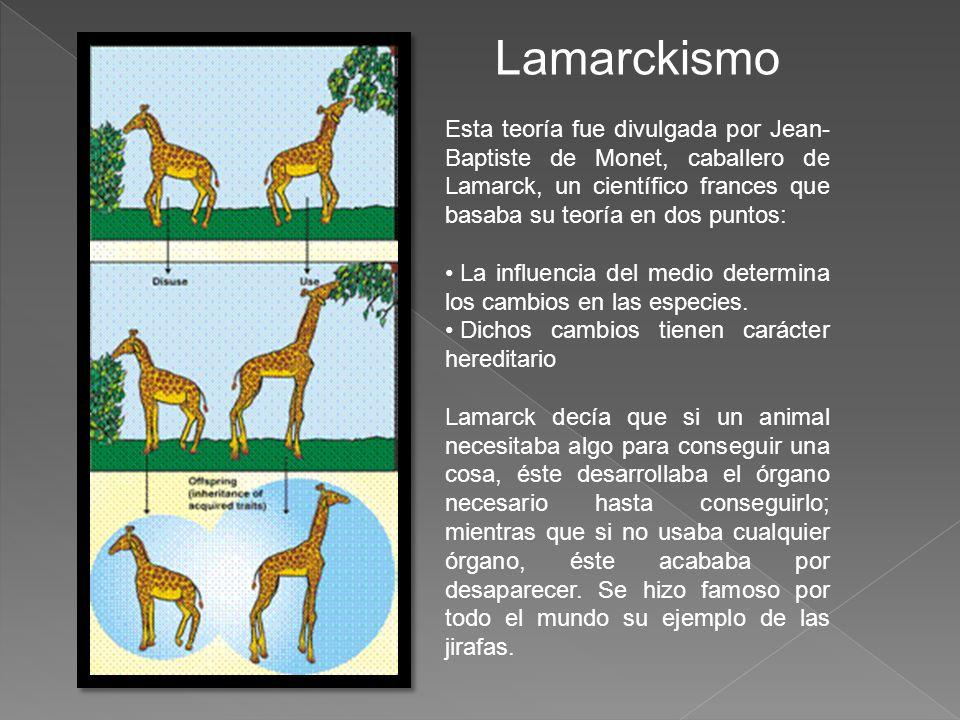 Lamarckismo Esta teoría fue divulgada por Jean- Baptiste de Monet, caballero de Lamarck, un científico frances que basaba su teoría en dos puntos: La