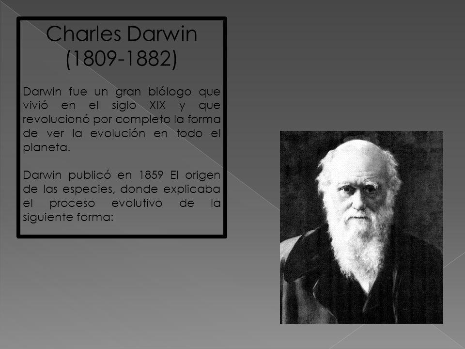 Charles Darwin (1809-1882) Darwin fue un gran biólogo que vivió en el siglo XIX y que revolucionó por completo la forma de ver la evolución en todo el