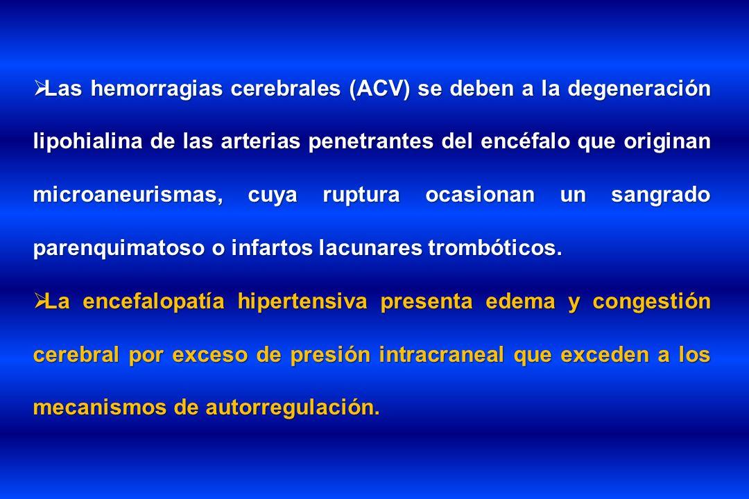 Las hemorragias cerebrales (ACV) se deben a la degeneración lipohialina de las arterias penetrantes del encéfalo que originan microaneurismas, cuya ru