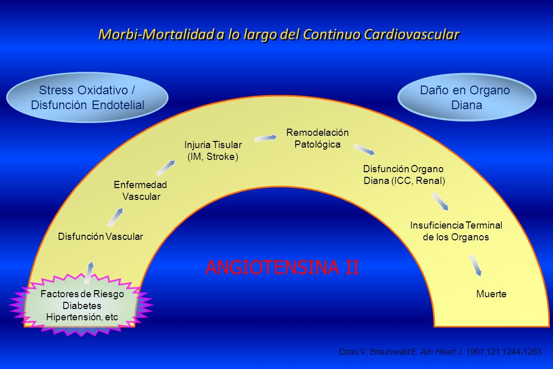 Morbi-Mortalidad a lo largo del Continuo Cardiovascular Disfunción Vascular Enfermedad Vascular Injuria Tisular (IM, Stroke) Disfunción Organo Diana (