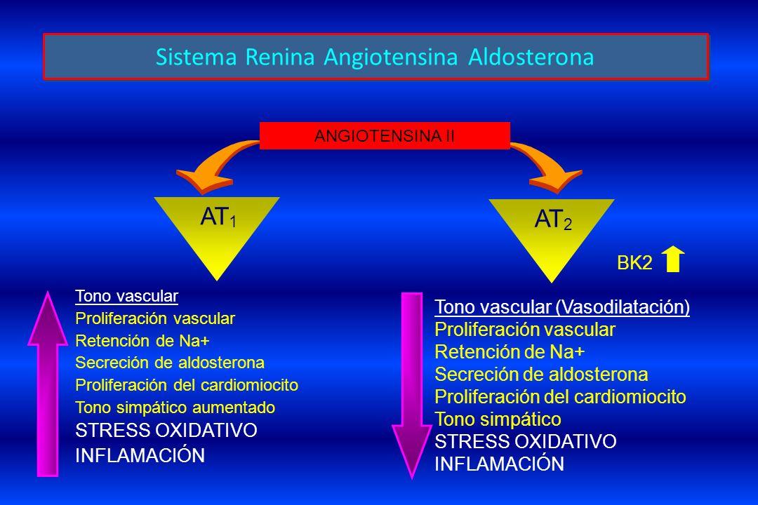 Tono vascular Proliferación vascular Retención de Na+ Secreción de aldosterona Proliferación del cardiomiocito Tono simpático aumentado STRESS OXIDATI