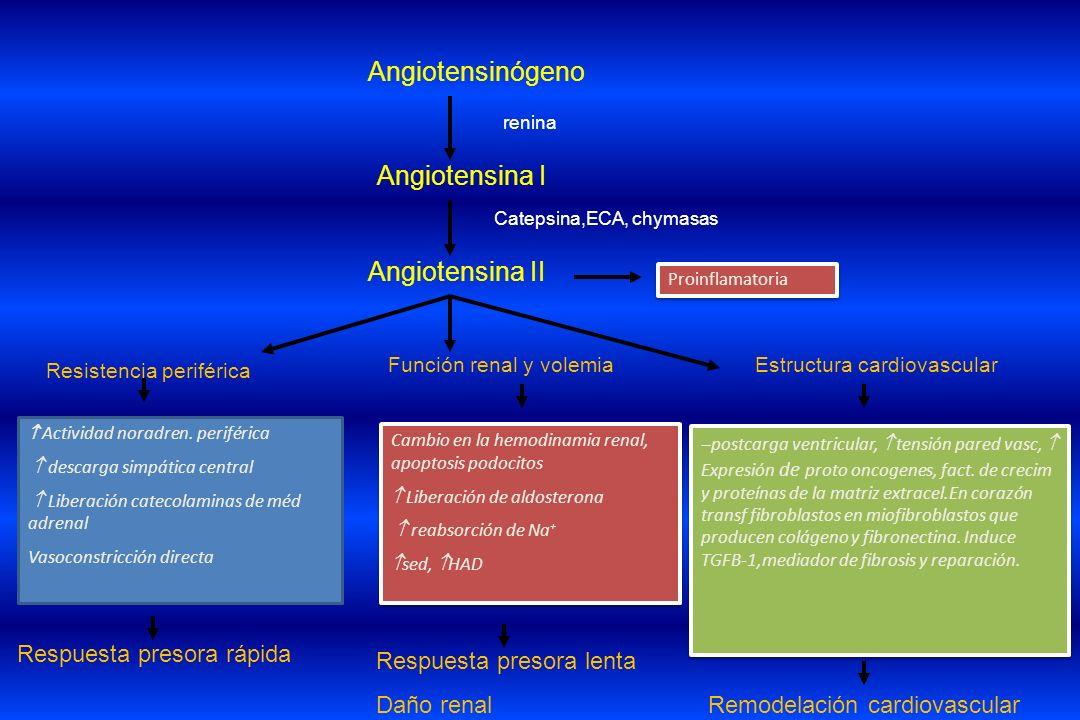 Resistencia periférica Estructura cardiovascular Angiotensinógeno Angiotensina I Angiotensina II Función renal y volemia Actividad noradren. periféric
