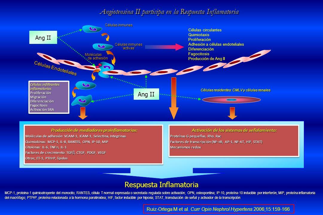 Ruiz-Ortega M et al. Curr Opin Nephrol Hypertens 2006;15:159-166 Angiotensina II participa en la Respuesta Inflamatoria MCP-1, proteina-1 quimioatraye